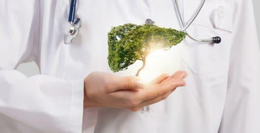 Jak regenerować wątrobę?